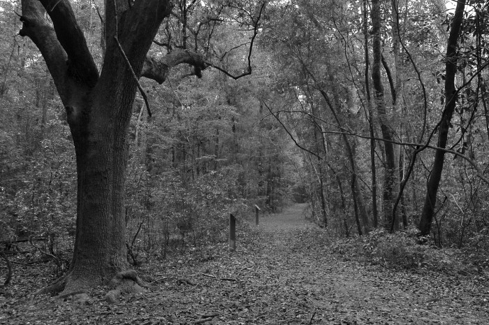 1. Many wonderful trails are located throughout Alabama.