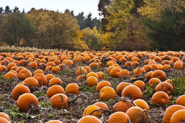6. Pumpkin patches!