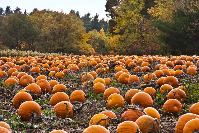 4. Pick out the perfect pumpkin.