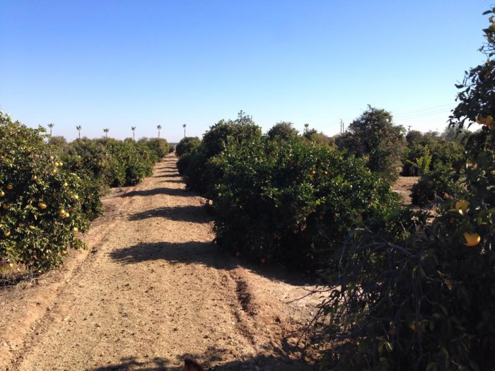 2. Cotton Lane Citrus, Surprise