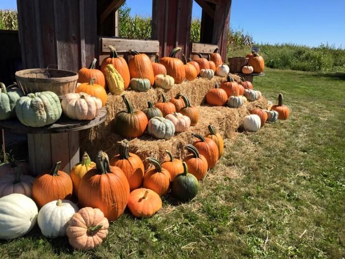 10. Colony Pumpkin Patch