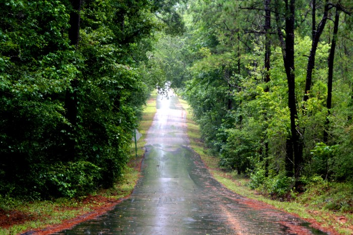 11. Mississippi is filled with rural areas, meaning a car is pretty much necessary in order to get around.