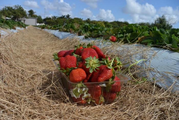 1. Knaus Berry Farm, Homestead