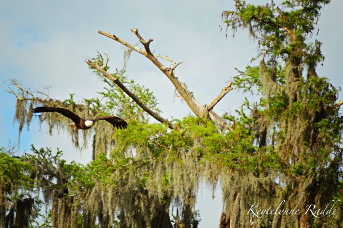 5) Mandalay National Wildlife Refuge, south of Houma