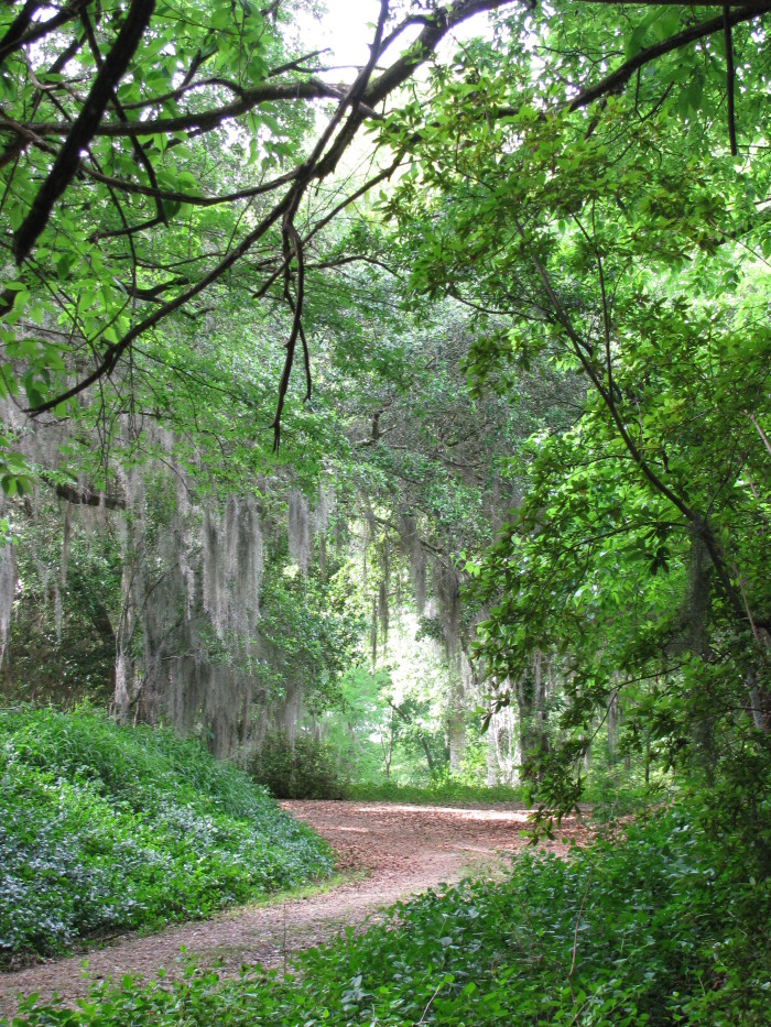 11. Taken in Hinds County near Old Bridgeport Road, this winding path couldn't be more inviting.