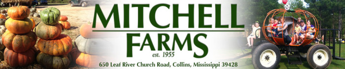 11. Mitchell Farms, Collins