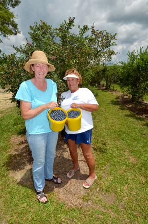 11. Blueberry Heaven, Vancleave