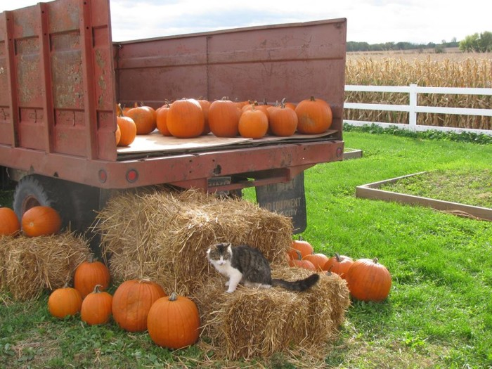 4. It's fall festival time at Red Barn Learning Farm, an awesome place to play and pick and teach kids about farming and animals!