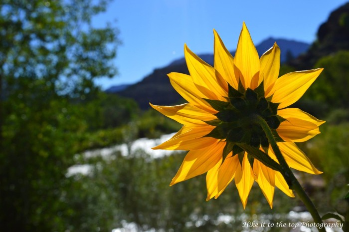 18. Mark Aldridge, of Hike it to the Top Photography, posted this photo taken near the Virgin River.