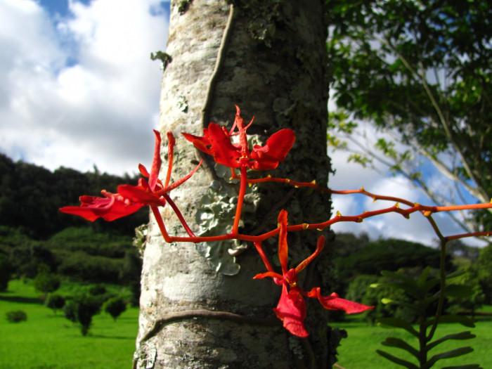 12) McBryde Tropical Botanical Garden, Kauai