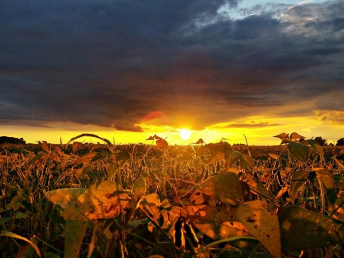 9. Jewelle Crawford captured a gorgeous snapshot of the sunset over Madison County!