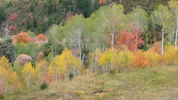 14. Jon Leo Gunderson shared this pic of American Fork.