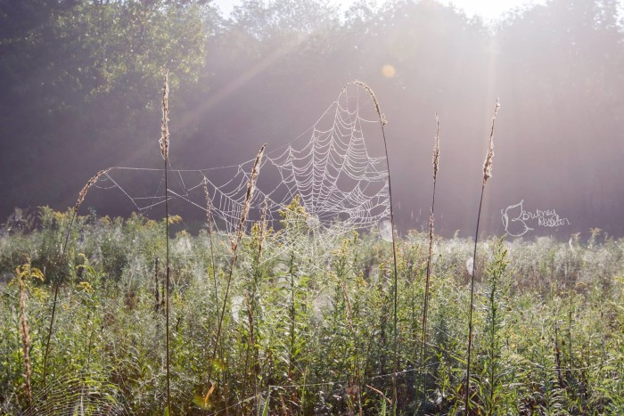 "1. 'Web Necklace"" at Silver Creek Metropark in Wadsworth, OH"