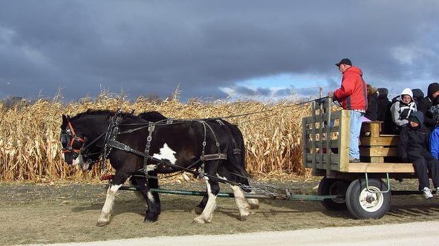 12. You hear talk of the local corn maze.