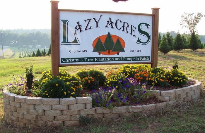 12. Lazy Acres Plantation, Chunky