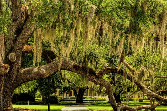 10. Oak Trees on Coastal GA
