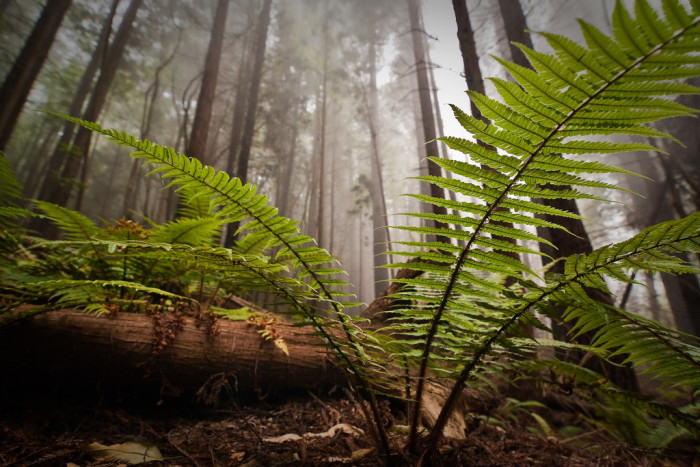 13) This Redwood forest in Polipoli State Park.