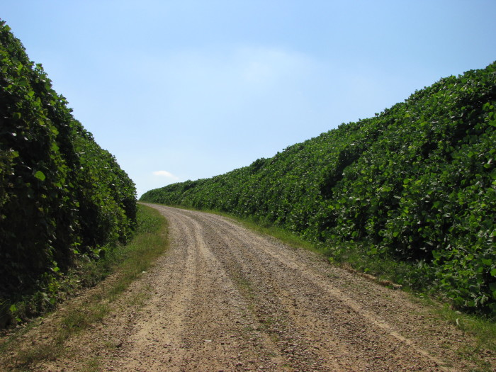13. If you're looking for seclusion, this Holmes County road is for you.