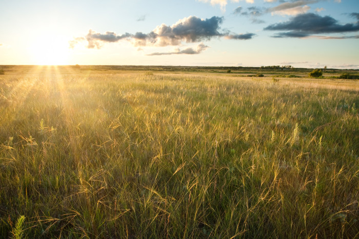 14. The prairie grasses are glowing in the sunset!