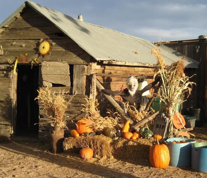 10. Pumpkin Pickin' Paradise (Milliken)
