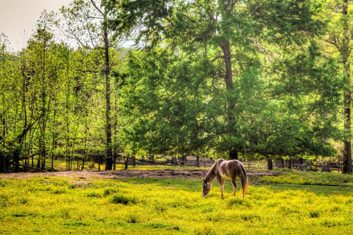 6. Oak Mountain State Park