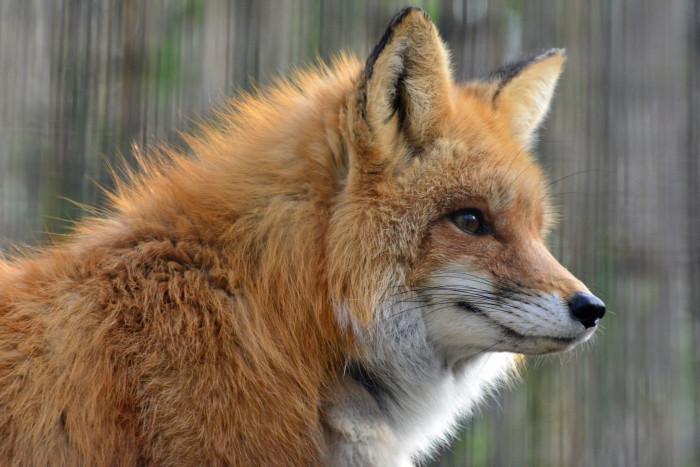 8. Incredible Wildlife