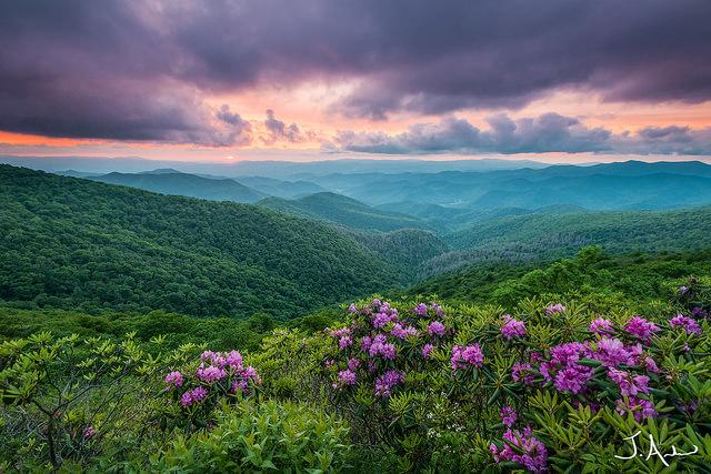 2. And purple heavens