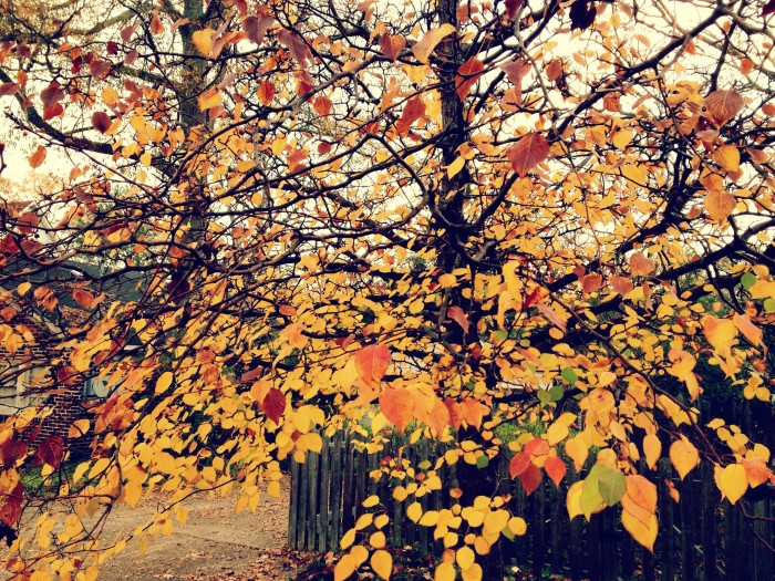 14. You can feel the crisp autumn air just by looking at this picture.