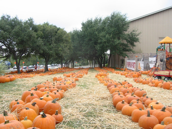 2) Kids everywhere are getting excited about running down the aisles at the pumpkin patch and picking the perfect pumpkins for carving.