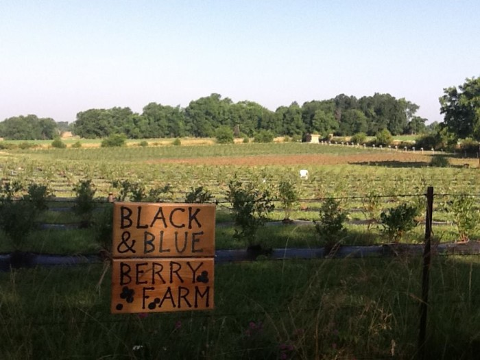 13.	Black and Blue Berry Farm, 5313 South Farm Road 241, Rogersville