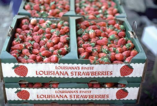 2) Strawberry Festival
