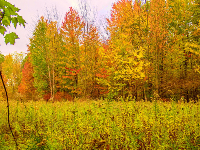 8. This is what autumn looks like at the Merry Lea Environmental Center!