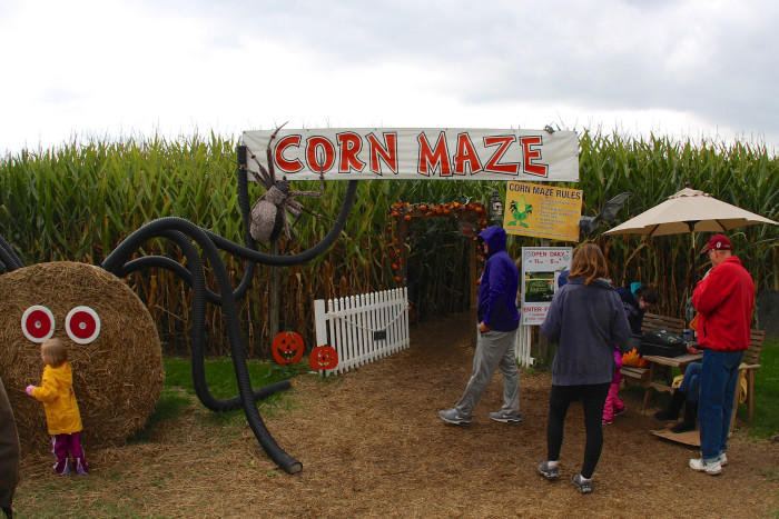 7. Attempt to find your way out of a corn maze. (Or simply get lost. Cause that's just as easy—if not more.)