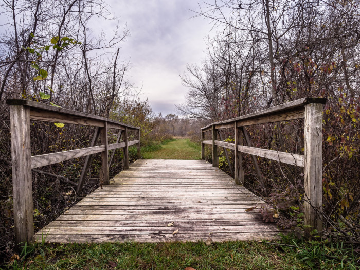 9. This is a bridge at the Merry Lea Environmental Learning Center of Goshen College. I don't know about you, but it makes me want to go exploring.