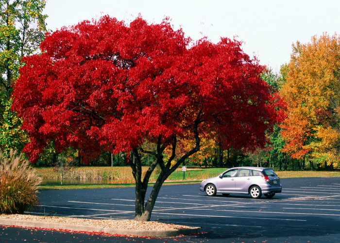 13. This is just a parking lot somewhere in Indianapolis. But, I've told you before that I'm a sucker for those bright red trees. I love how the photographer captured this piece.