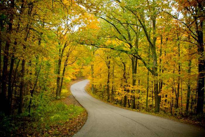 4. Brown County State Park is a truly incredible place to go exploring. You could get lost in the forest for hours and who knows what secrets you might find?