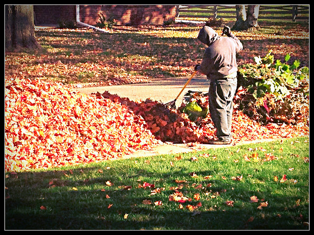 5. Talk about how much we love the changing leaves, then complain when they fall to the ground and we have to rake them.