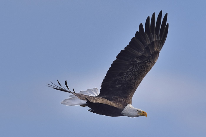4. We have rare and fascinating wildlife.