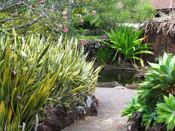 16) Moir Gardens, Kauai