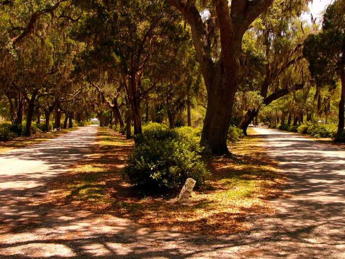 10. Which path to take? -Savannah