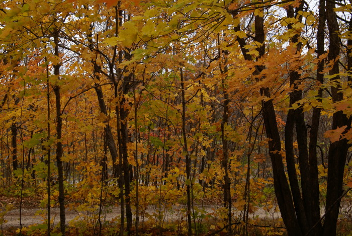 5. Maplewood State Park is full of splendid colors!