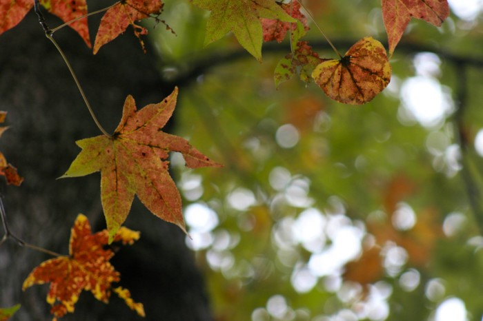 1. The lovely fall colors only add to the beauty at Natchez State Park.