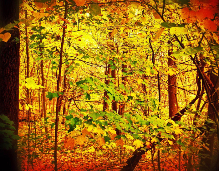 7. I'm not sure where in Indiana this photo was taken, but I couldn't leave it out of this piece. Just look at the colors! This is what autumn is all about.