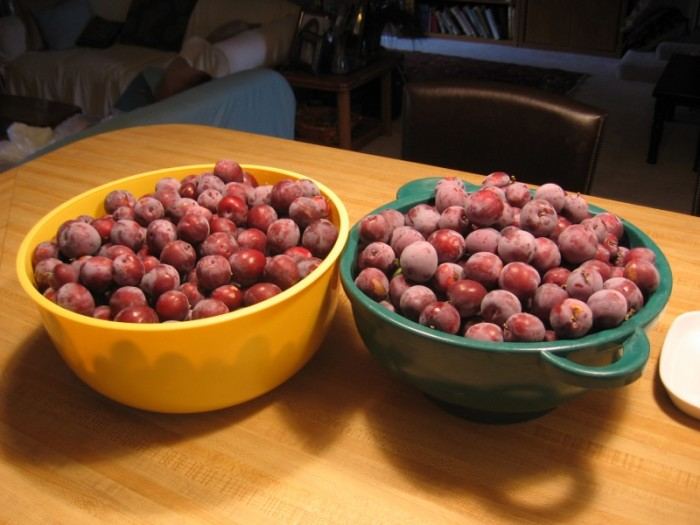 11) We pick delicious fall fruits from our backyards, or go to a fruit farm to fill up our buckets.