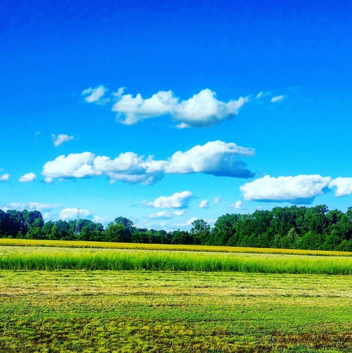 18. This vibrantly-colored Tupelo field was snapped by Charlie Marie Stamey.