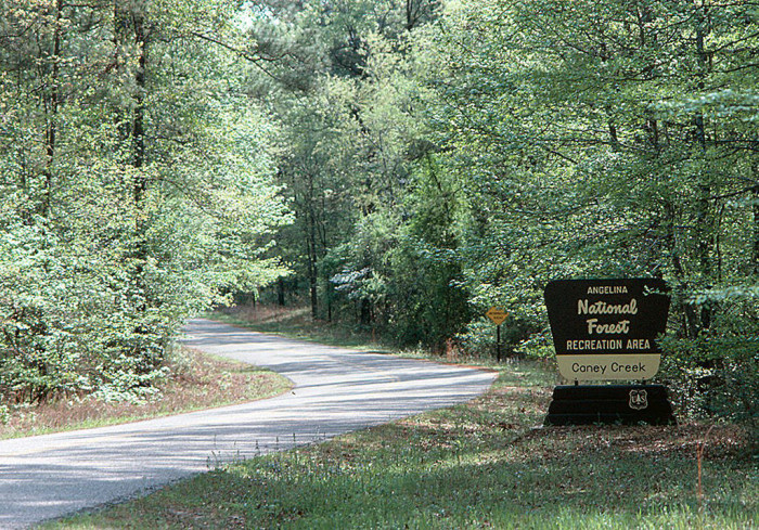 14) Angelina National Forest