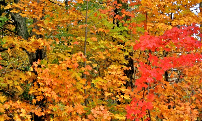 7. Jay Cooke State Park south of Duluth on the St. Louis River is a fan favorite and one of the most-visited fall foliage spots!