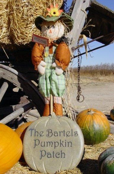 5. The Bartels Pumpkin Patch (Fort Collins)