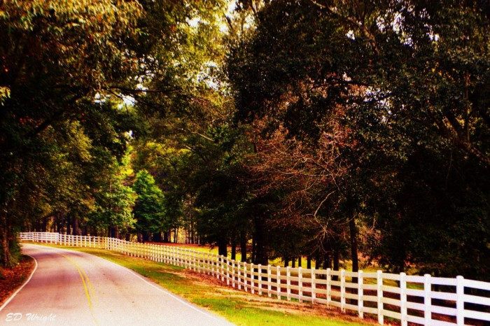 19. Wow! Ed Wright's photo, which was taken near Hattiesburg, confirms that back roads truly are the most beautiful.