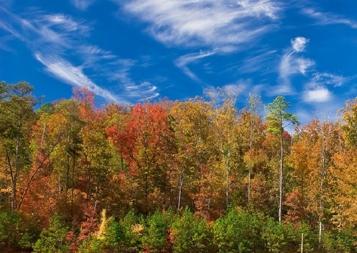 1. Alabama's fall foliage is absolutely GORGEOUS!